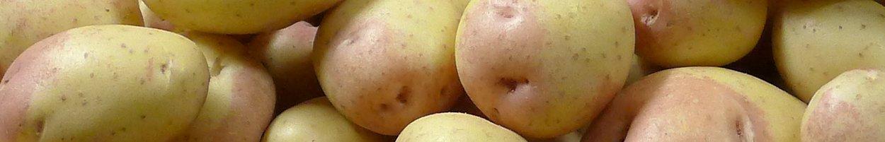 mjölig potatis sorter